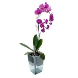 Самополивна саксия за орхидея Мимоза 15