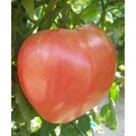 Домати биволско сърце розово 0,5 гр.