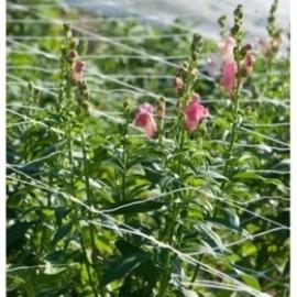 Мрежа за краставици и цветя Solania
