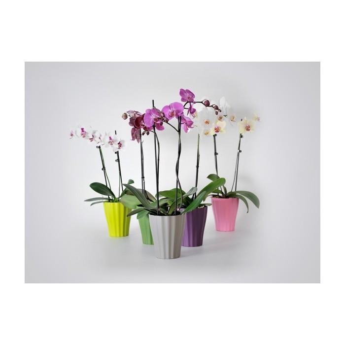 Саксии за орхидеи Ola